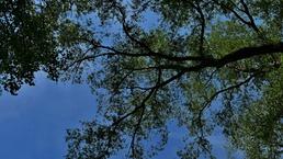 Orez stromov na Staničnej ulici.
