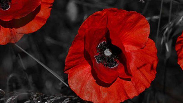 11. november - Deň veteránov