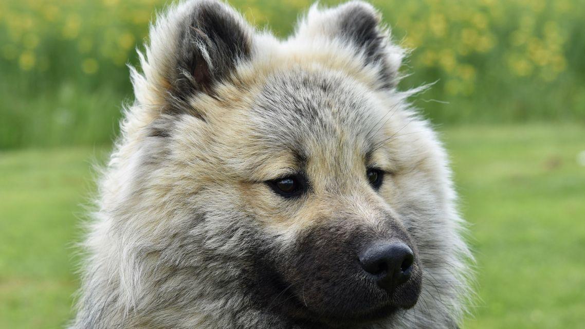 Register odchytených a túlavých zvierat prístupný online