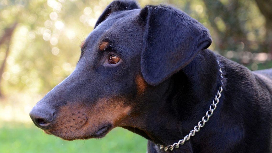 Upozornenie pre majiteľov psov